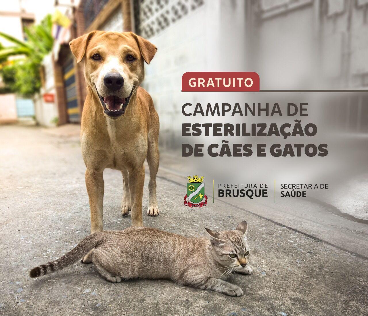Prefeitura de Brusque disponibiliza link para cadastro do processo de castração em cães e gatos