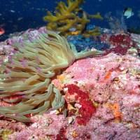 Coral HAPC Explorer