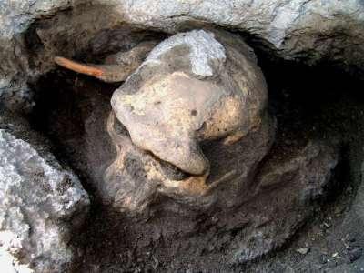 cranio-evolucao-humana-ap-1