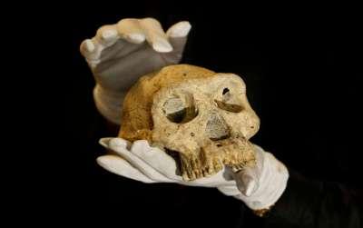 cranio-evolucao-humana-ap-3