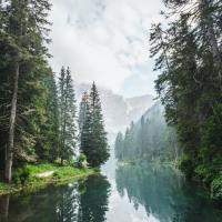 Relájate con esta caminata virtual por el bosque