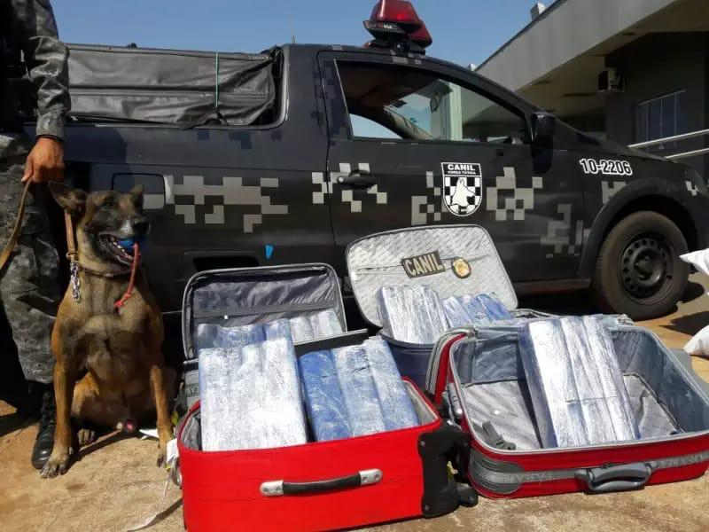 Canil da Polícia Militar de Dourados se despede do Cão Farejador - K9 Roberto