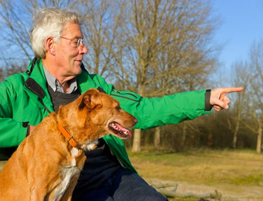 uso-de-perros-em-residencias