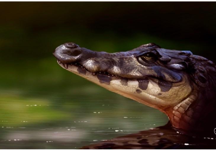 Descoberta nova espécie de jacaré que habitava Sul do Amazonas