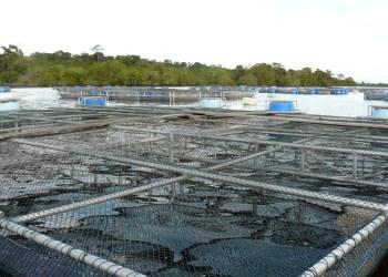 Decreto presidencial vai ampliar a aquicultura empresarial e familiar no Amazonas