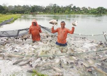 Feirão do Pescado da ADS começa nesta terça-feira