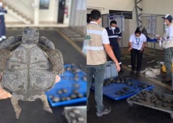 Carga com filhotes de tartaruga é barrada em aeroporto