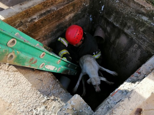 Bombeiros militares resgatam cachorro preso em um bueiro em Tabatinga