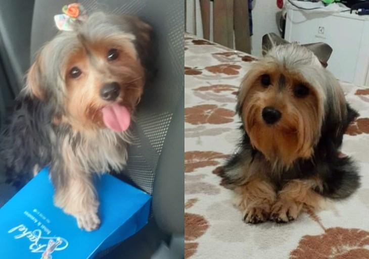 Dona de cadela furtada pede ajuda pra encontrá-la