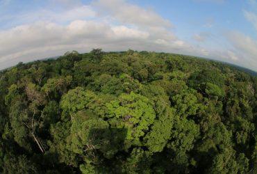 "Governo do Amazonas adere à campanha global ""Race to Zero"""
