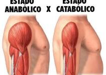A Diferença Entre Catabolismo e Anabolismo