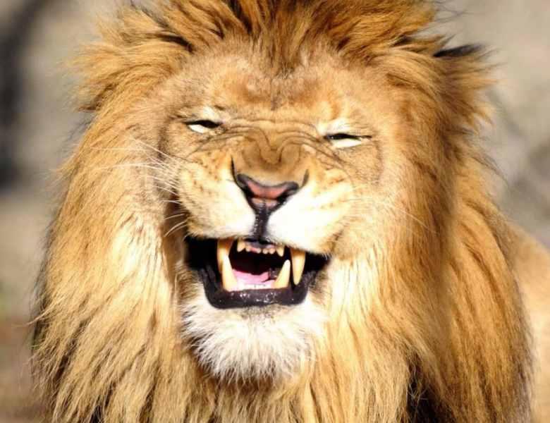 Não declare, o governo errou e o Leão vai te pegar