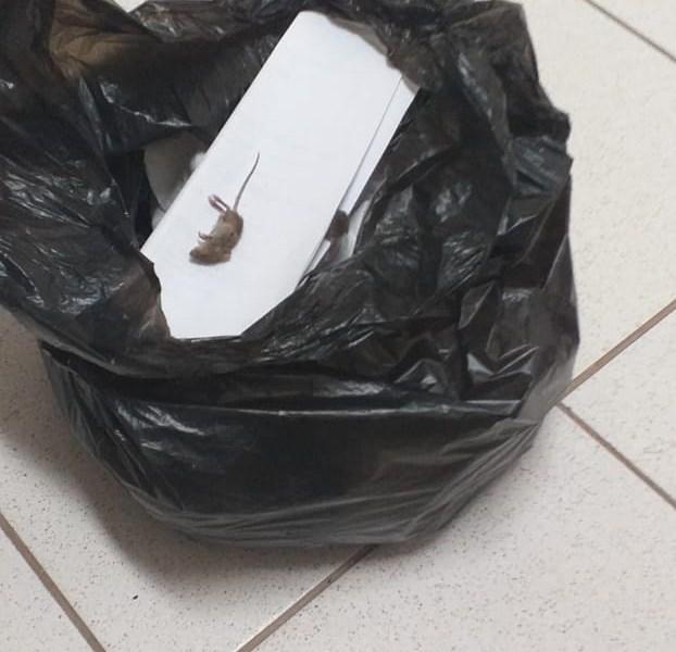 Desvalorizada pelo governo, Polícia Civil é sucateada e até delegado é obrigado a caçar rato em delegacia