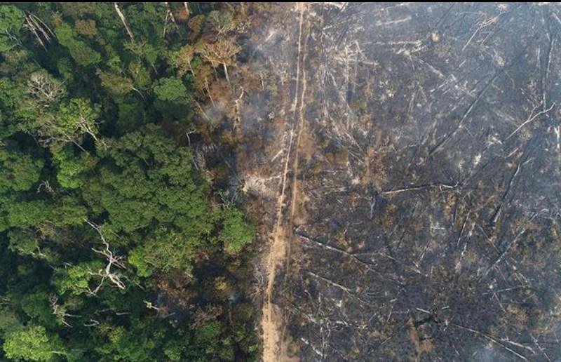 """Colunista da Folha propõe """"vender Amazônia aos gringos"""""""