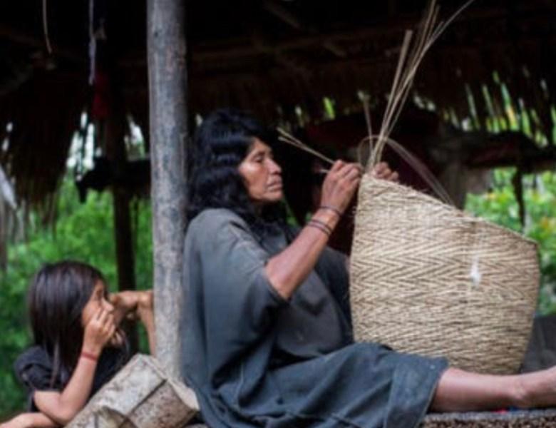 Como o povo indígena Ashaninka não pegou Covid-19 até agora