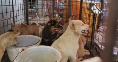 Feira anual de carne de cachorro é aberta na China; ativistas esperam que seja a última