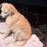 Homem joga cão de uma altura de sete metros e vai preso em Silves