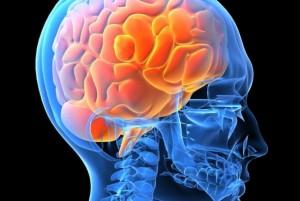 cerebro-20120626172835