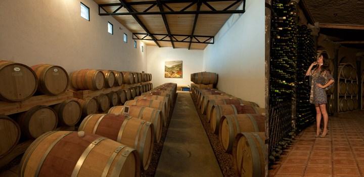 Circuito del Vino guanajuatense: atractivo para los viajeros