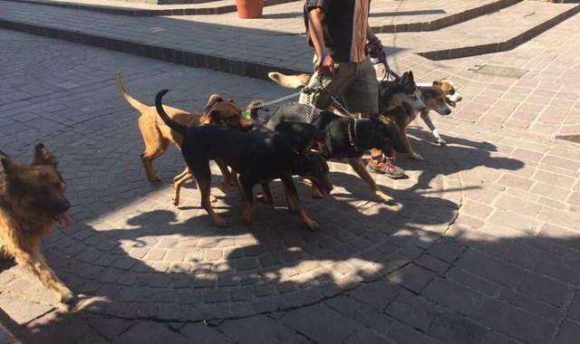 Aprueban reglamento de protección animal