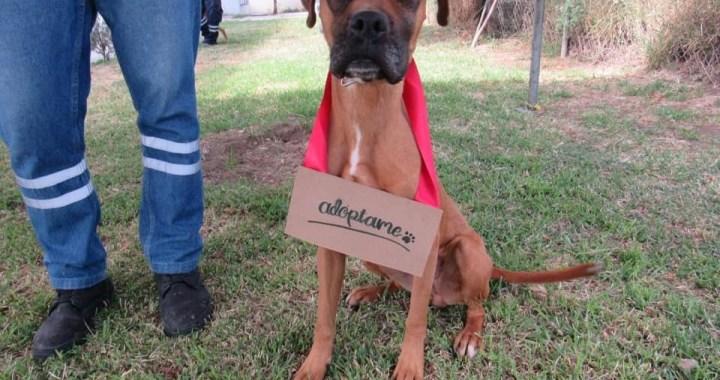 Reglamento de protección animal de Guanajuato en la vanguardia estatal