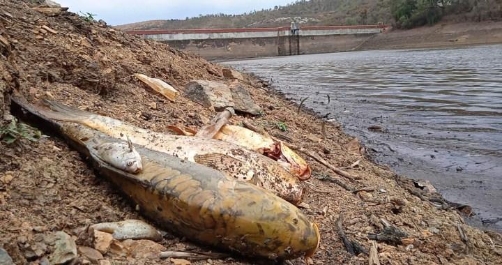 Brotan peces muertos en la presa de La Esperanza