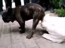 O mundo realmente está cheio de coisas bizarras, um dos episódios mais recentes foi desse cachorro que cruza com uma pata até a morte.