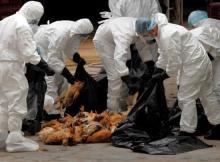 Foi confirmada gripe das aves na província sul-africana que faz fronteira com Moçambique. A eclosão de um surto de gripe das aves foi confirmada numa farma