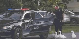 """A polícia da Pensilvânia """"prendeu"""" um bando de patos """"delinquentes"""" que foram flagrados """"vadiando"""" próximo a um comércio local."""