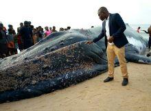 O corpo de uma baleia apareceu na praia dos Biques, cidade da Beira, no centro de Moçambique, na madrugada deste sábado (16).