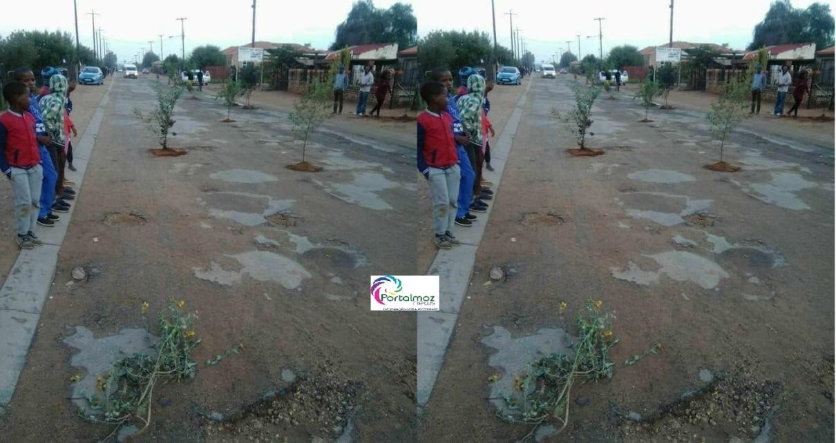 Moradoresplantam árvores nos buracos das estradas na cidade da Beira