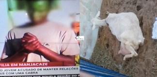 O jovem atacou a cabra por duas vezes dizem os vizinhos, sendo que dá primeira vez conseguiu fugir, e desta vez os vizinhos lhe viram perseguindo a cabra
