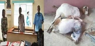 Mbithi Munyao, de 20 anos, arrastou os animais do local onde estavam a pastar para trás de um arbusto, onde levou a cabo actos sexuais com as cabras durante