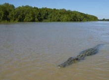 RebeccaMunkombwe crocodilo