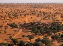 Grupo internacional de pesquisadores descobriu que no oeste do Sahara e na savana do Sahel, norte da África, existem cerca de 1,8 bilhão de árvores