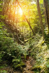 Your Own Path in a Beautiful Forest