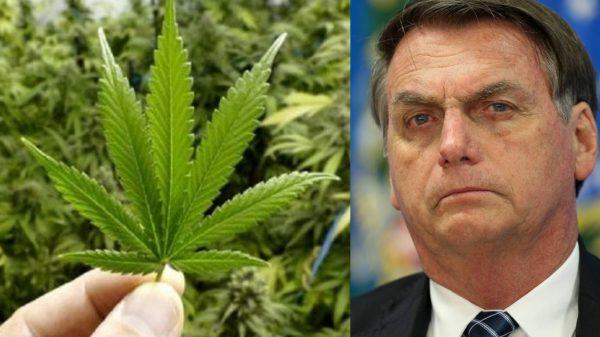 Bolsonaro vota contra, mas ONU aprova retirada da maconha da lista de drogas perigosas