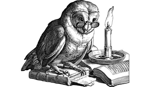Ilustrasi burung hantu sombong--- Pixabay-Gordon Johnson