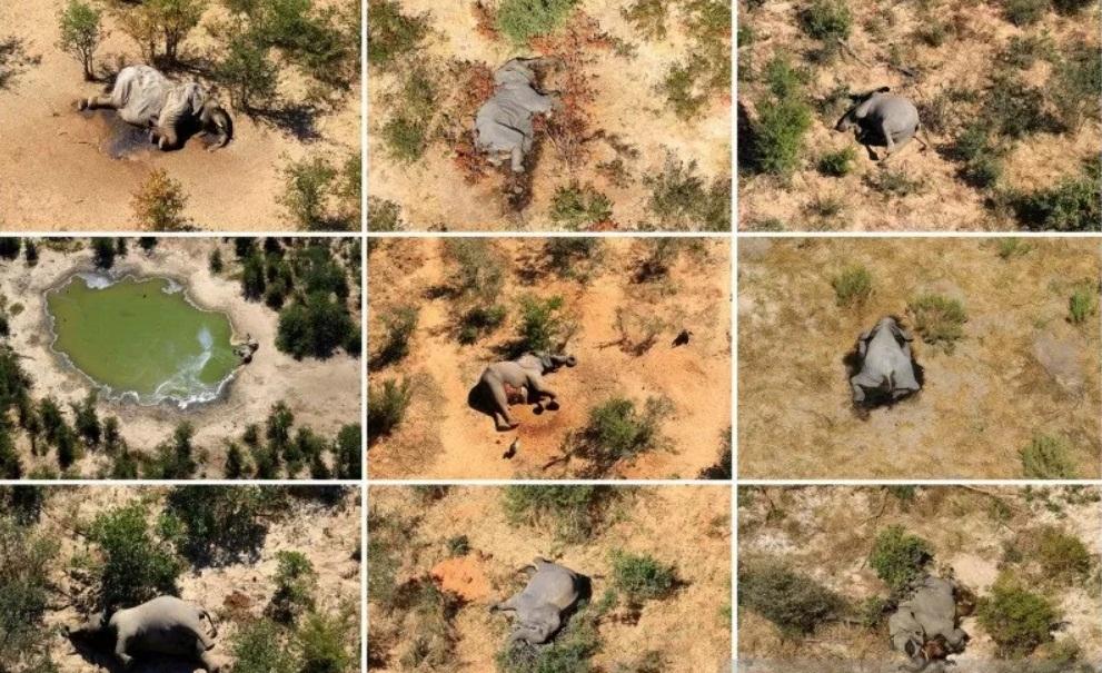 Sebanyak 275 Gajah di Botswana Mati Secara Misterius