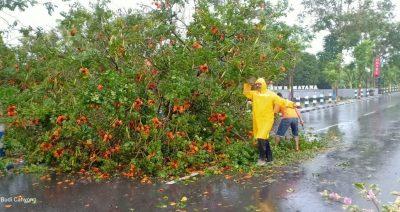 Hujan Lebat Disertai Angin Kencang di Pamekasan, Banyak Pohon Tumbang