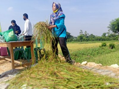 Pakai pupuk ini, Petani Desa Blajo Lamongan Hasilnya Meningkat