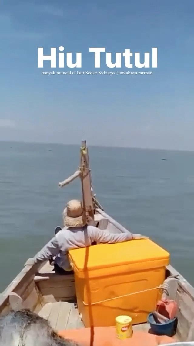 Hiu Tutul banyak muncul di laut Sedati Sidoarjo. Beberapa waktu belakangan, menurut para nelaya…
