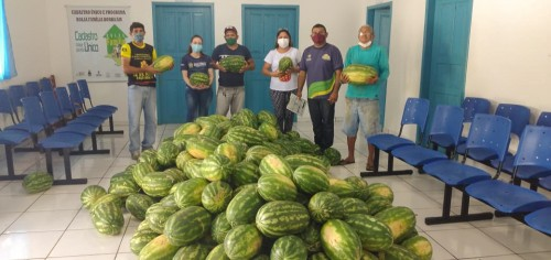 Idam acompanha colheita de 63 toneladas de melancia dos agricultores de Borba