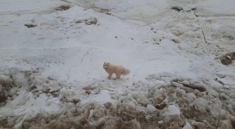 Marinheiros resgatam cadela no meio do mar congelado na Rússia