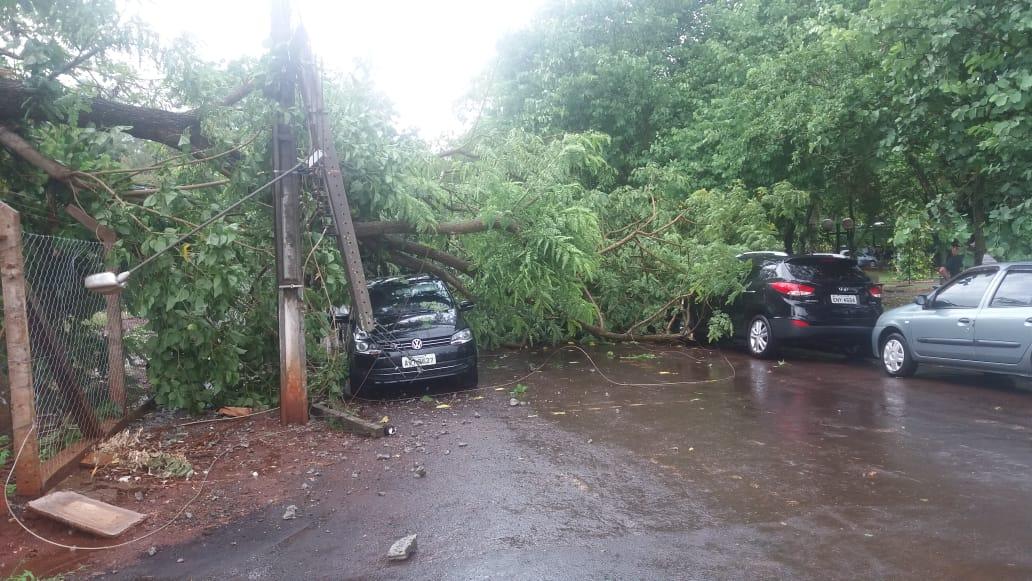 Tempestade provoca queda de árvores e poste em Cambará; sem vítimas