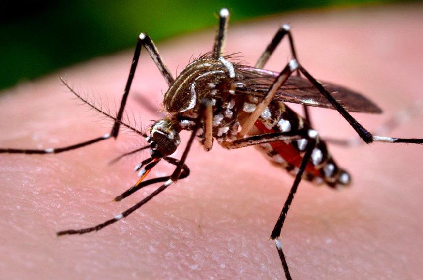 Em uma semana, casos de dengue crescem 47% no Paraná