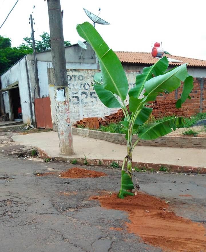Jacarezinho: Moradores do Bairro Aeroporto plantam bananeira em buraco na rua para protestar contra o descaso