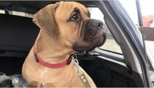 Cadela percorre 200 quilômetros à procura dos donos que a abandonaram