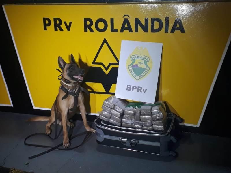Equipe canil 2ª Cia/BPRv de Jacarezinho apreende 02 malas com maconha em bagageiro de ônibus