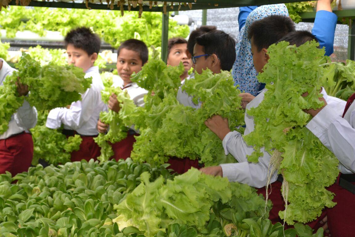 Siswa SDM 18 Surabaya Panen Sayur Hidroponik di Atap Sekolah